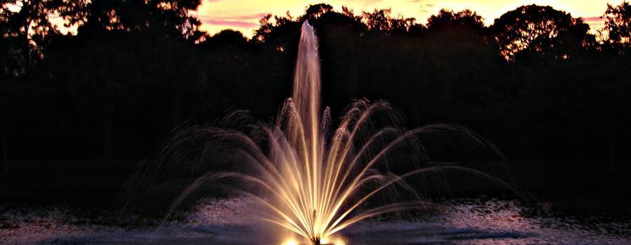 Top Five Pond Maintenance Tips for Successful Summer