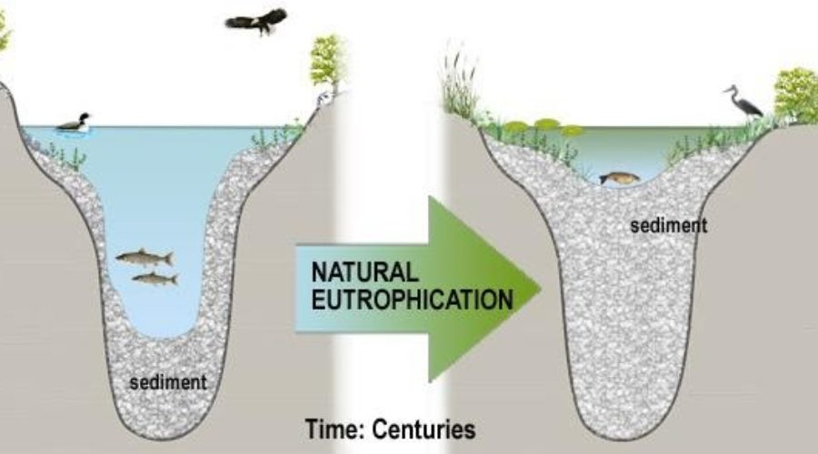 Natural Eutrophication